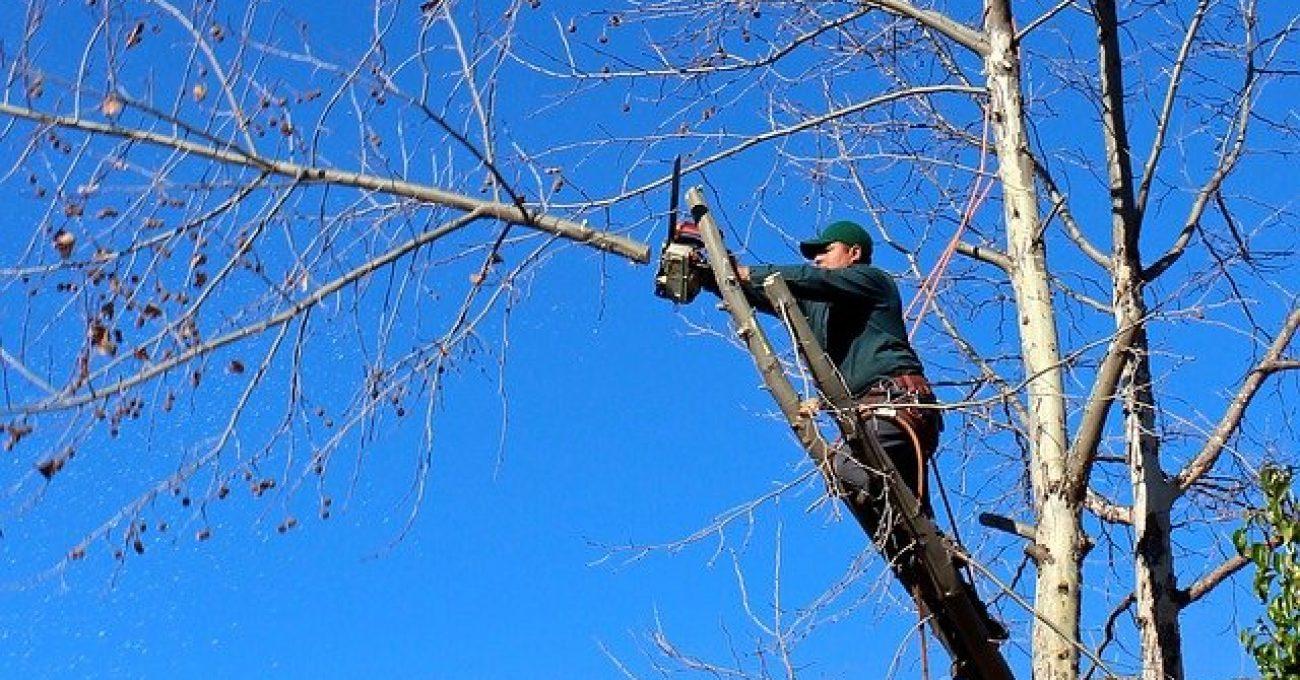 tree-service-valdosta